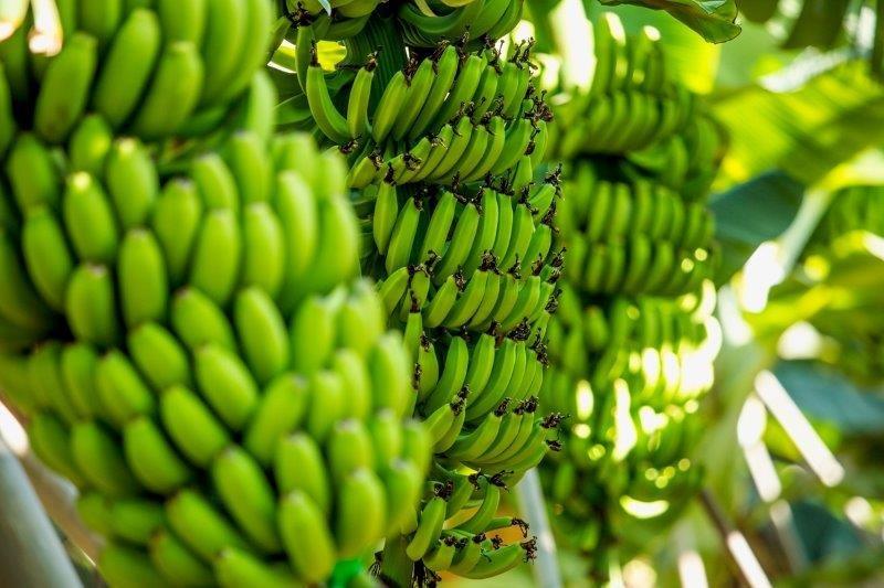 Hotel El Navio - bananenplantage